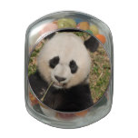 Cute Giant Panda Bear Glass Candy Jar