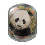 Cute Giant Panda Bear Jelly Belly Candy Jar