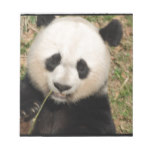 Cute Giant Panda Bear Notepad