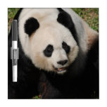 Cute Giant Panda Dry-Erase Board