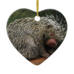 Cute Porcupine Ornament