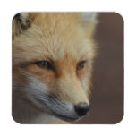 Cute Red Fox Beverage Coaster