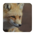 Cute Red Fox Drink Coaster