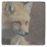 Cute Red Fox Stone Coaster