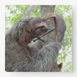 Cute Sloth Square Wall Clock