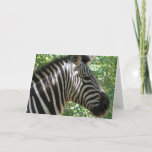 Cute Zebra Greeting Card