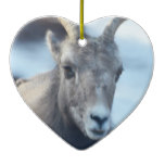 Face of a Bighorn Sheep Ceramic Ornament