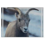 Face of a Bighorn Sheep Cutting Board