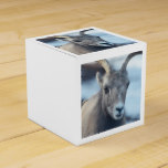 Face of a Bighorn Sheep Favor Box