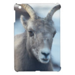 Face of a Bighorn Sheep iPad Mini Covers