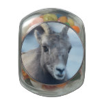 Face of a Bighorn Sheep Jelly Belly Candy Jars