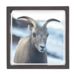 Face of a Bighorn Sheep Keepsake Box