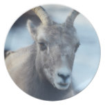 Face of a Bighorn Sheep Melamine Plate