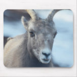Face of a Bighorn Sheep Mouse Pad