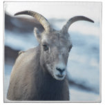 Face of a Bighorn Sheep Napkin
