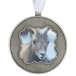 Face of a Bighorn Sheep Pewter Ornament