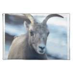 Face of a Bighorn Sheep Placemat