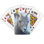 Face of a Bighorn Sheep Playing Cards