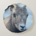 Face of a Bighorn Sheep Round Pillow