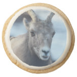 Face of a Bighorn Sheep Round Shortbread Cookie
