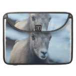 Face of a Bighorn Sheep Sleeve For MacBook Pro