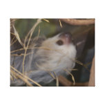Face of Sloth Canvas Print