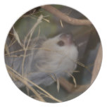 Face of Sloth Dinner Plate