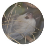Face of Sloth Plate