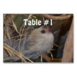 Face of Sloth Table Number