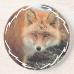 Fox Species Coaster