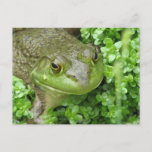 Frog on Marsh Postcard