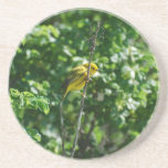 Goldfinch Drink Coaster