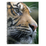 Gorgeous Bengal Tiger Face Notebook