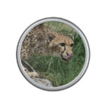 Gorgeous Sleek Cheetah Licking His Nose Bluetooth Speaker