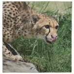 Gorgeous Sleek Cheetah Licking His Nose Cloth Napkin