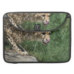 Gorgeous Sleek Cheetah Licking His Nose MacBook Pro Sleeve