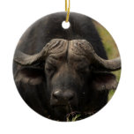 Grazing Water Buffalo Ornament
