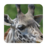 Great Giraffe Beverage Coaster