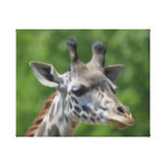 Great Giraffe Canvas Print