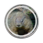 Groundhog Jelly Belly Tin