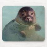 Harbor Seal Mouse Pad
