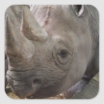 Horned Rhino  Sticker