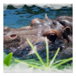 Hungry Hippo Poster
