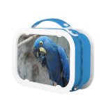 Hyacinth Macaw Lunch Box