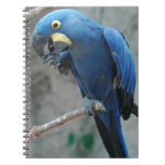 Hyacinth Macaw Notebook