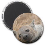 Hyena Picture Magnet