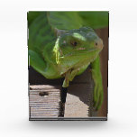 Iguana in the Tropics Acrylic Award