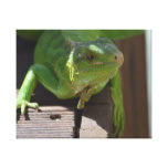 Iguana in the Tropics Canvas Print