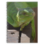 Iguana in the Tropics Notebook