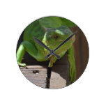 Iguana in the Tropics Round Clock